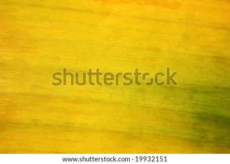 banana leaf texture - stock photo