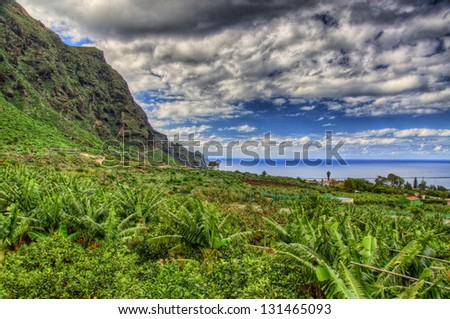 Banana palms plantation in north-west coast of Tenerife, Canarian Islands - stock photo