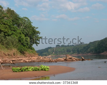 Bananas lying on a river bank in the Peruvian Amazon. - stock photo