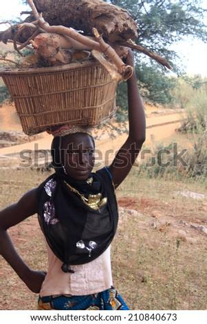 BANDIAGARA, MALI - OCTOBER 2 , 2008:  Unidentified woman carrying firewood on head in bandiagara in the Mopti region in Mali on october 2, 2008, Bandiagara, Mali - stock photo
