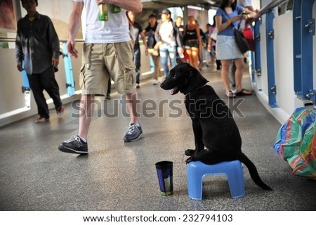 BANGKOK - MAR 7: A dog on a city centre pavement sits with a donation cup on Mar 7, 2012 in Bangkok, Thailand. Dogs are commonly used to solicit donations in the Thai capital. - stock photo