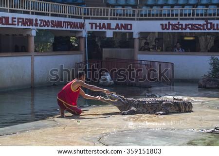 Bangkok, Thailand - January 3: Crocodile show and the exciting and dangerous crocodile farm zoo on January 3, 2016 in Bangkok, Thailand. - stock photo