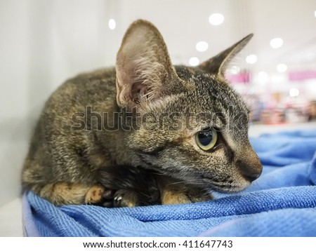 Bangkok, Thailand - November 22, 2015 : unidentified cat in cage - stock photo