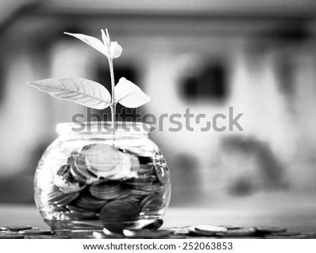 bank,piggy bank,Money,Coins,Concept,Tree, Sprout growing on glass piggy bank with home in saving money concept, B & W - stock photo