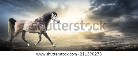 Banner with arabian horse against background of stormy sky - stock photo