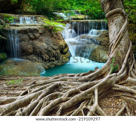 banyan tree and limestone waterfalls in purity deep forest use natural background,backdrop - stock photo