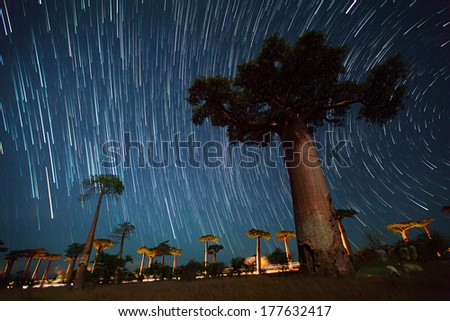 Baobab alley and starry sky. Madagascar - stock photo