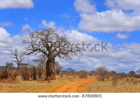 Baobab or  boab, boaboa, bottle tree, upside-down tree, and monkey bread tree Tarangire National Park is the sixth largest national park in Tanzania after Ruaha, Serengeti, Mikumi, Katavi and Mkomazi - stock photo