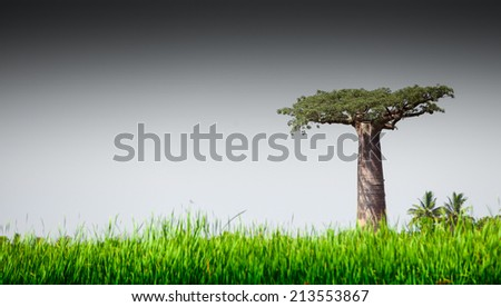Baobab tree and lush green grass - stock photo
