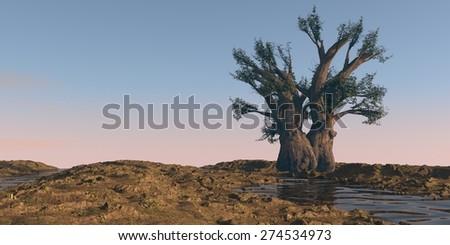 baobab tree on watered desert terrain - stock photo