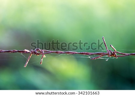 Barbed wire in green background - stock photo