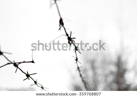 Barbed wire in snow. Fencing. Fence with barbed wire. Let. Jail. Thorns. Block. A prisoner. Barbed wire under tension. - stock photo