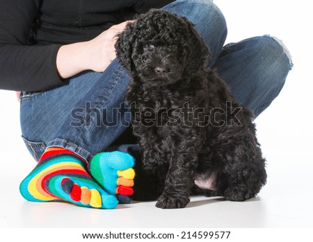 barbet puppy with owner sitting isolated on white background - stock photo