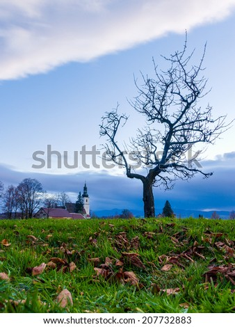 Bare tree in autumn countryside - stock photo