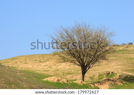 Bare tree on a grassy meadow - stock photo