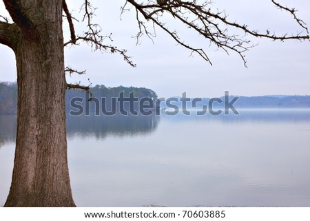 Bare tree on foggy lakeshore with mountains in distance - stock photo