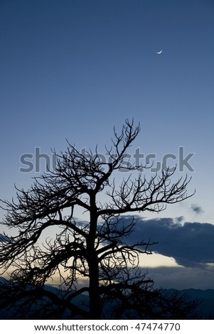 Bare tree with crescent moon in sky - stock photo