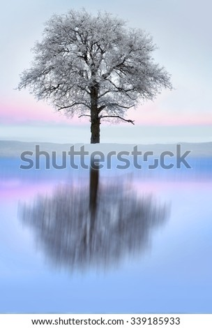 Bare tree with rime frost and snow in winter landscape with pink sky, reflected in shiny ice of lake - stock photo