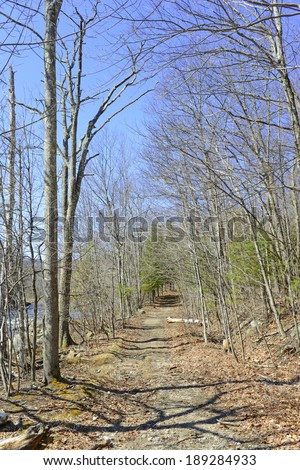Bare Trees in the Forest with Blue Sky - stock photo