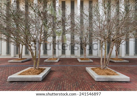 Bare trees outside the Florida State Capitol building in Tallahassee, Florida - stock photo