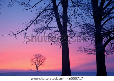 Bare winter trees at dawn in a foggy rural landscape, Michigan, USA - stock photo