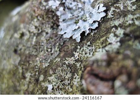 Bark of a tree - stock photo
