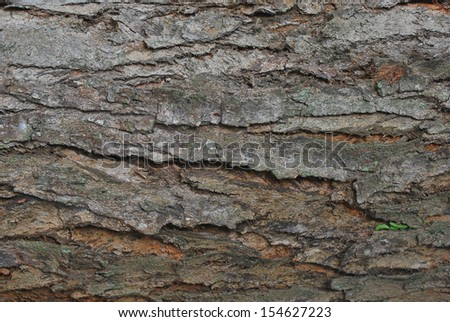 Bark of a tree. Close up. Texture image for background. - stock photo
