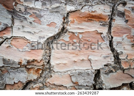Bark of live pine tree texture closeup - stock photo