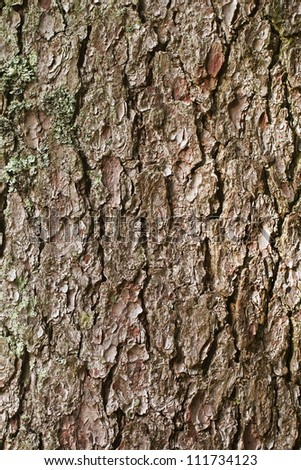 bark of old tree - stock photo