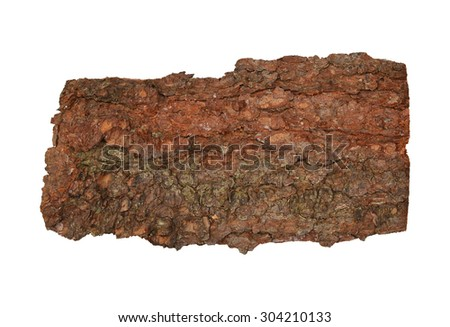 Bark of spruce tree isolated on white background. Top view. - stock photo