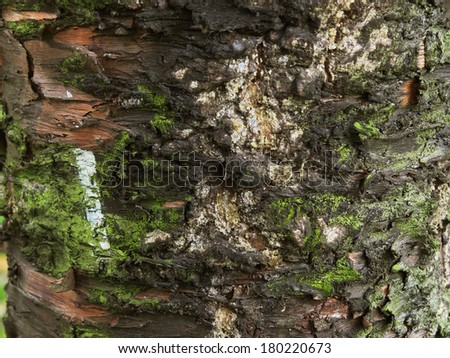 Bark of tree texture with moss. - stock photo