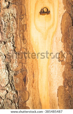 Bark of tree. The cut wood. Background - stock photo
