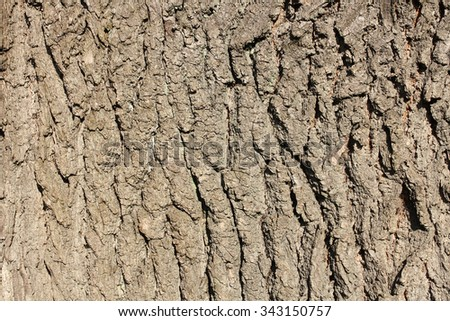 bark tree background - stock photo