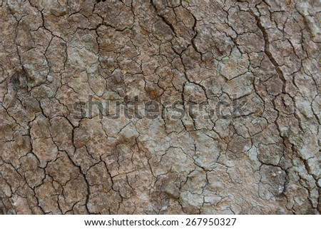 Bark Tree Texture - stock photo