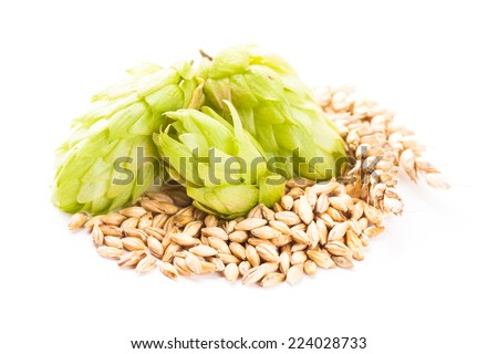 Barley and hops isolated on white background. Beer concept - stock photo