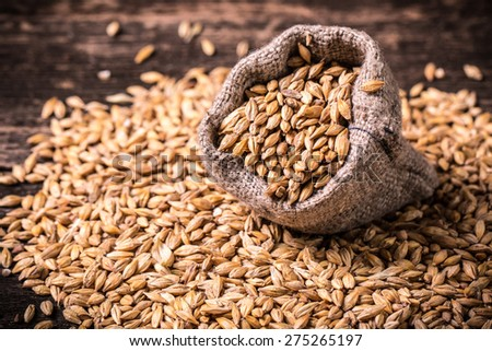 barley on wooden table - stock photo