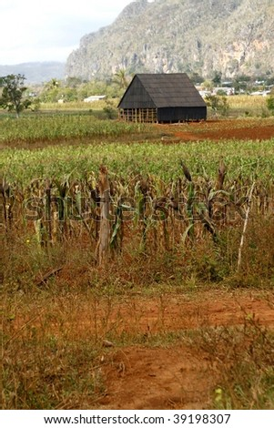 Barn for drying tobacco in Cuban countryside, in a little town of Vinales - stock photo