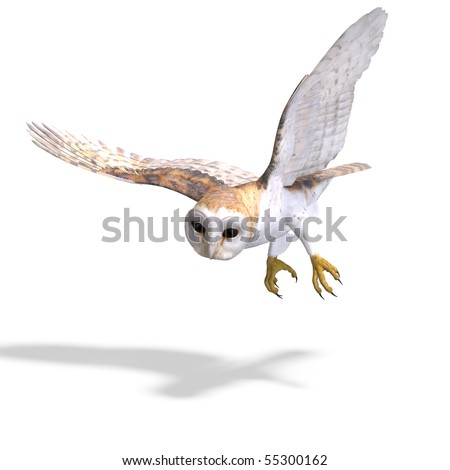 Barn Owl Bird. 3D rendering with clipping path and shadow over white - stock photo