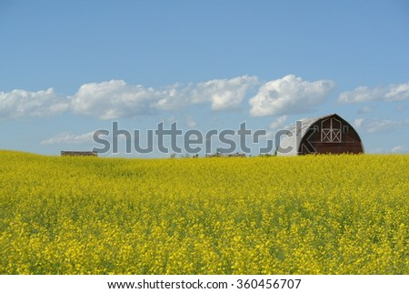 Barn Peeking over Canola Field - stock photo