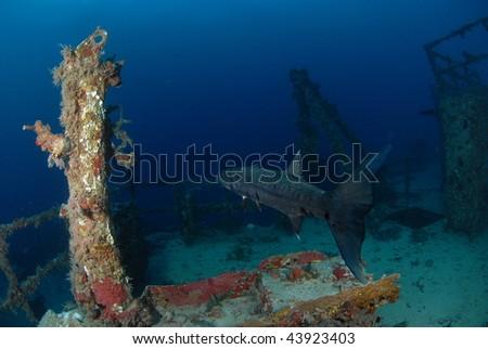 Barracuda on the Spiegel Grove - stock photo