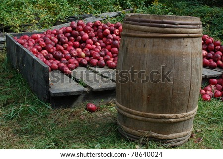 A rotten apple spoils the barrel essay