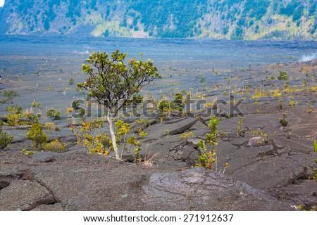 Barren bottom of Kilauea Crater with sulfur gas vents and ohi??a lehua plants in Hawaii Volcanoes National Park, Big Island, Hawaii - stock photo