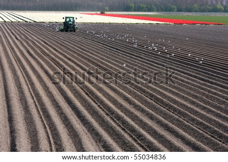 Barren field with tulips the background - stock photo