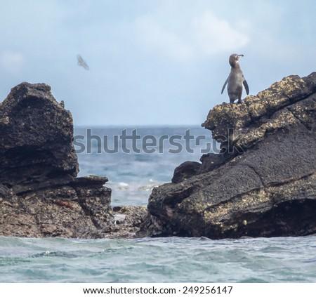 Bartolome Island - Galapagos National Park ecuador  South America - stock photo