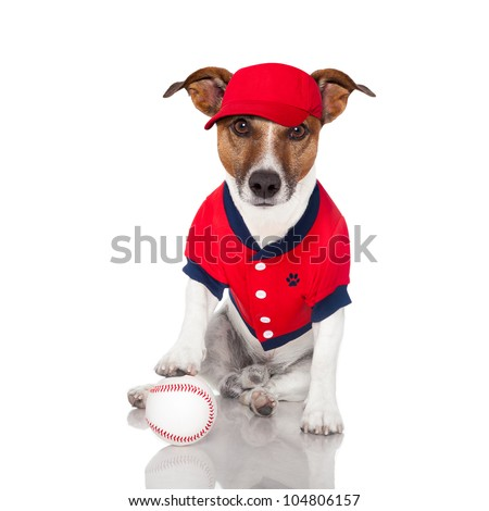 baseball dog with a baseball and a red cap - stock photo