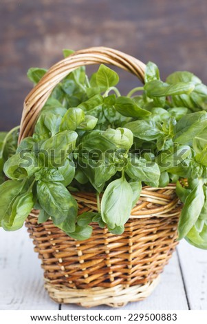 Basil basket, some of the leaves in focus, some are not - stock photo