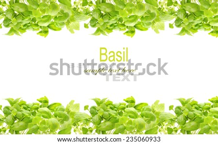 Basil frame with copy space isolated on white - stock photo