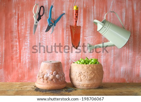 Basil in a flower pot, gardening tools, free copy space - stock photo