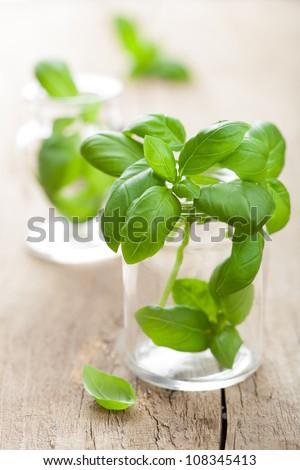 basil in glass - stock photo