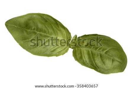 basil leaves  - stock photo